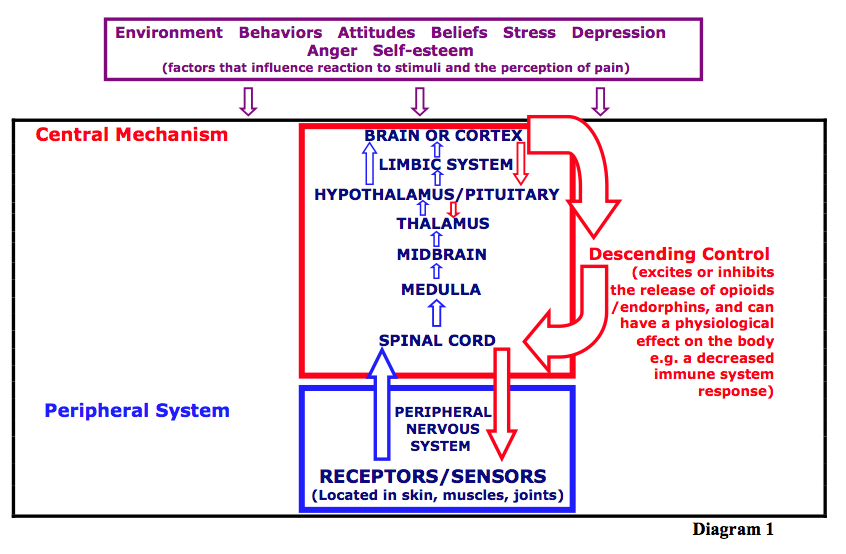 Chronic Pain Mechanism The Pain Mechanism Footnotes