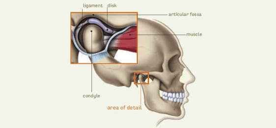 Temporomandibular Joint Tmj Program In Guelph South City