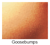 Goosebumps IMS